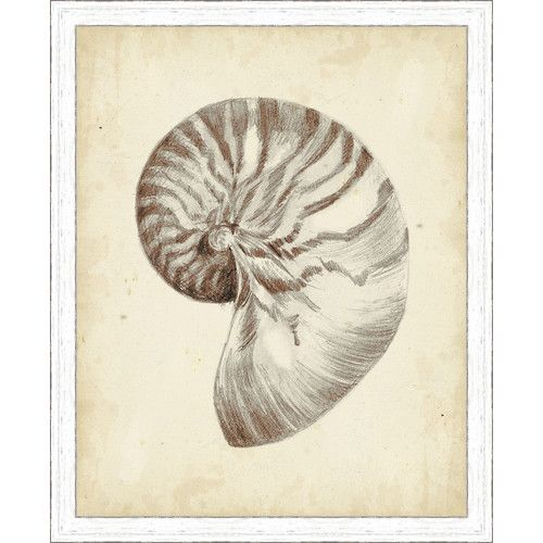 Ashton Wall Décor LLC \'Coastal Antique Shell Study I\' Framed ...