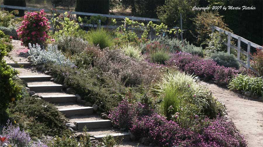Xeric Garden Plants
