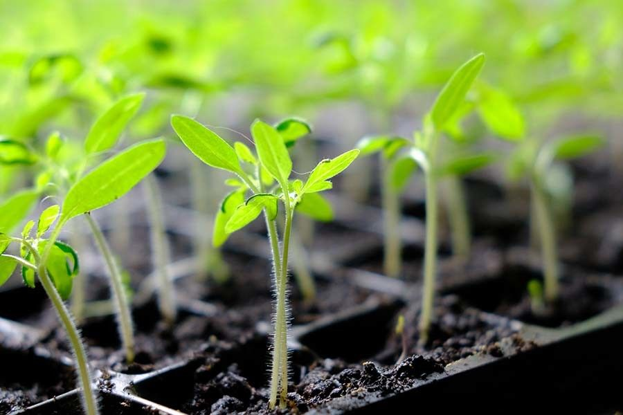 4 secrets to starting vegetable seeds indoors grow your