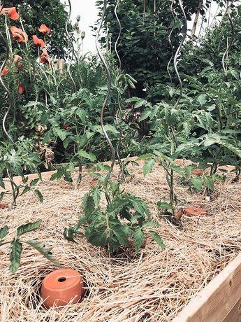 Photo of Acolchado en lugar de riego – garden blog capital garden