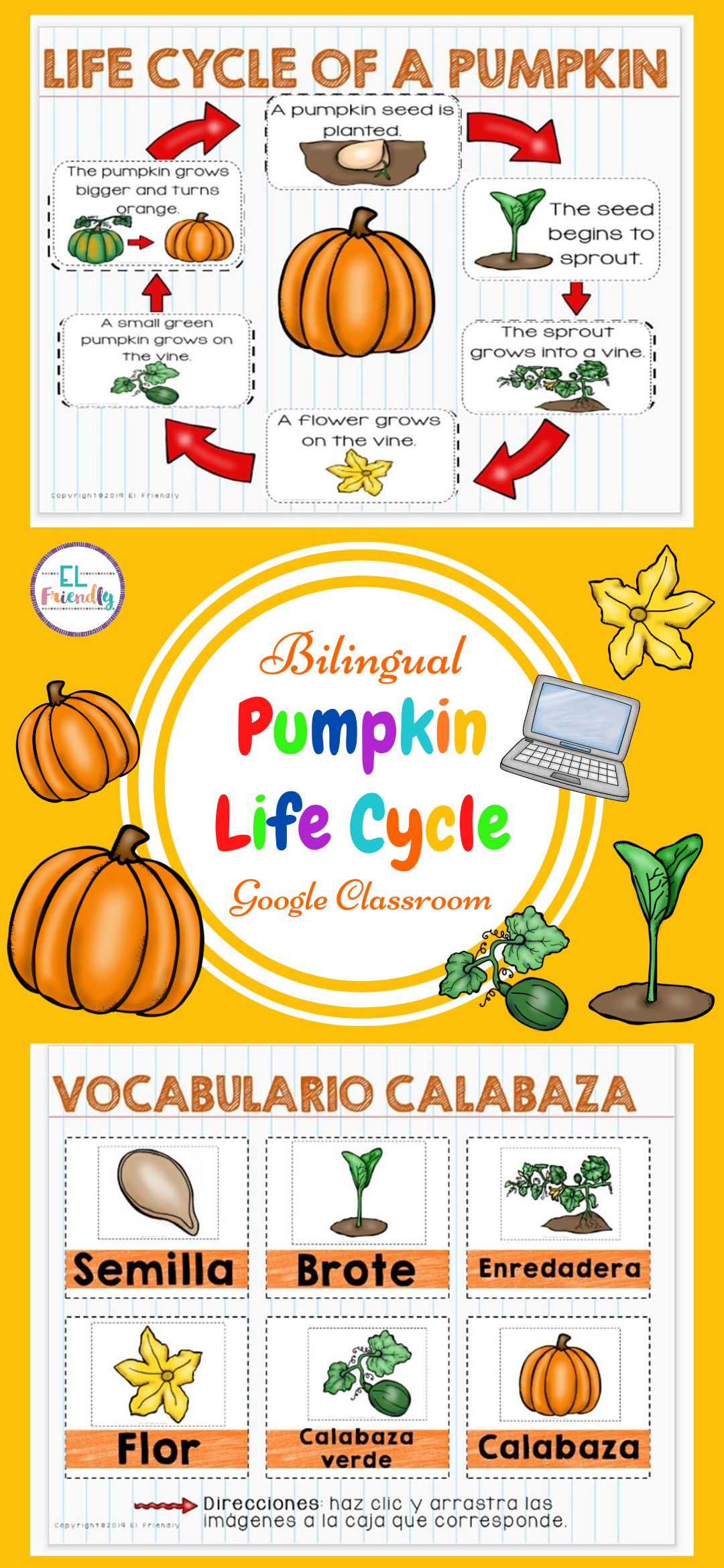 Pumpkin Life Cycle Esl Classroom Spanish Version