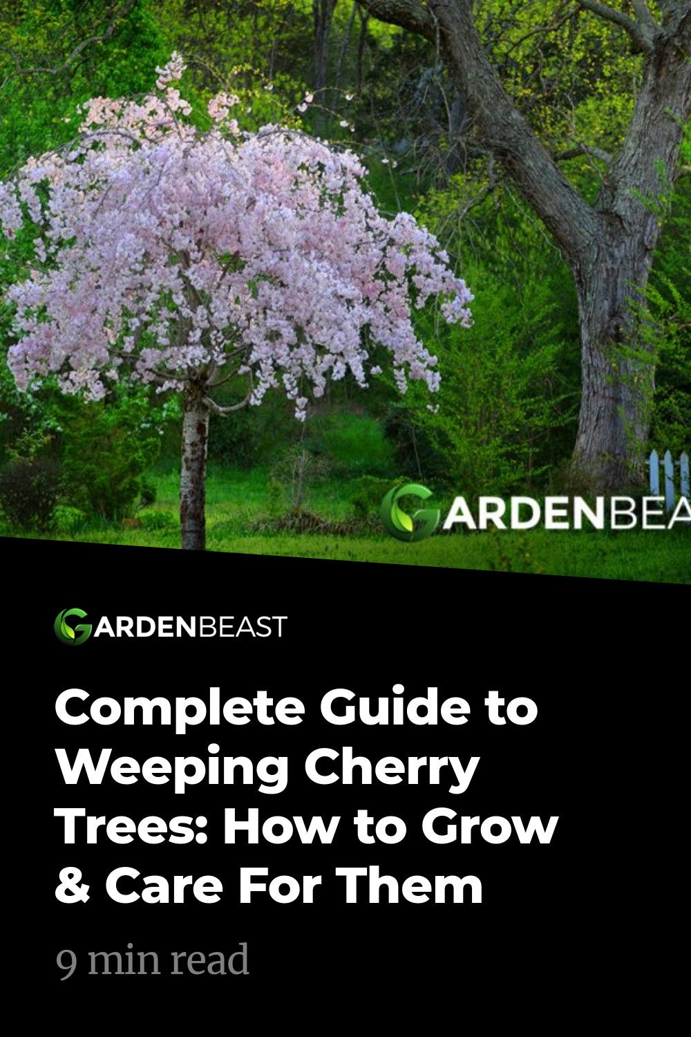 Complete Guide To Weeping Cherry Trees How To Grow Care For Them Weeping Cherry Tree Flowering Cherry Tree Crabapple Tree