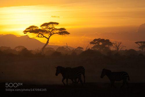 Tramonto all'Amboseli by fiemme  sunset animals africa wildlife zebra amboseli kenya safari tramonto Tramonto all'Amboseli fiemme