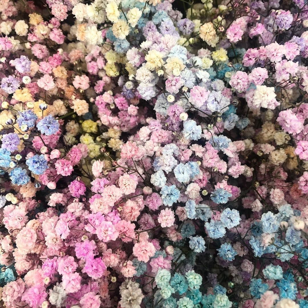 Melanie Jespersen On Instagram Candy Floss Morning Have A Good One Stalksandroots Candyfloss Blooms Fl Flower Installation Candy Floss Dried Flowers