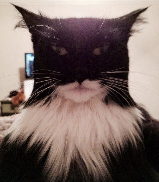 Cat looks like Batman