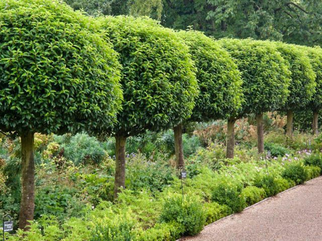 Download Evergreen Trees Small Gardens Cori Matt Garden Garden