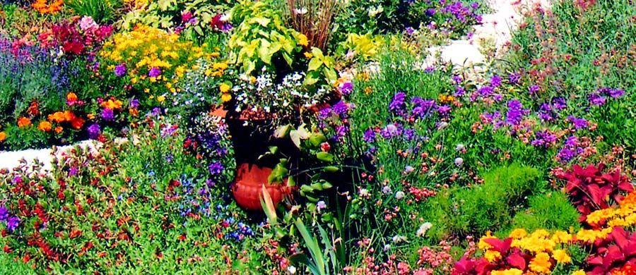 wildflower yard designs Thunderbird Design Denver Landscaping