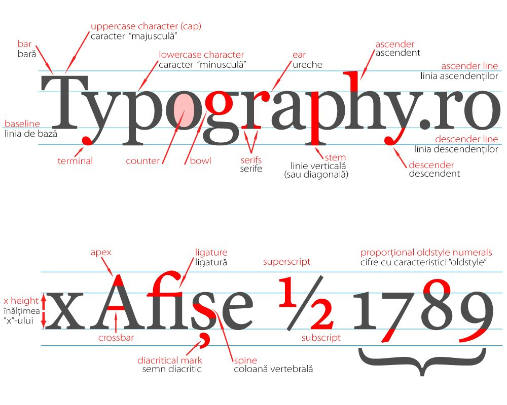 Type Anatomy Research Typography Fonts And Typo