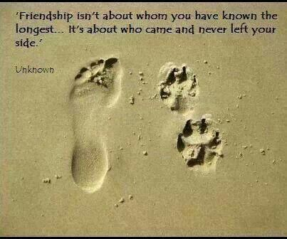 Pin By Jema On Amazing Words Dog Quotes Animal Quotes Pets