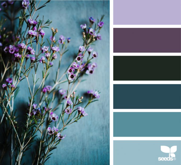 Color Nature Color Schemes Seeds Color Color Pallets
