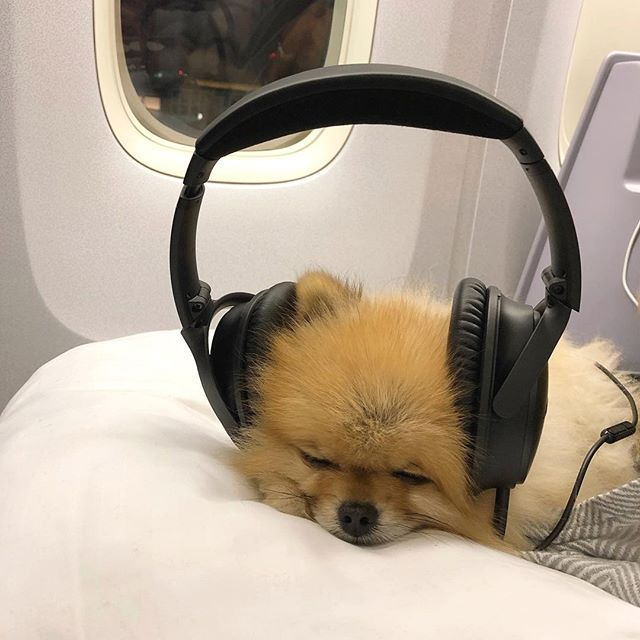 i think i hear yanny...or is that laurel?   Comment below if You like this  Via: @perry.the.pom Double tap to like and follow me to enjoy more pics about Pomeranian Shop for Pomeranian lovers Link in my bio @friendly_pomeranian Thank you so much !!!   #friendlypomeranian #pomeraniansofig #justpomeranians #pomeranianmania #pomeranianforsale #pomeraniansofinsta #pomeranianworld #pomeranianlovers #pomeranianbaby #pomeraniancross #pomeranian_moments #pomeranianbrothers #pomeranianoftheday #pomerania