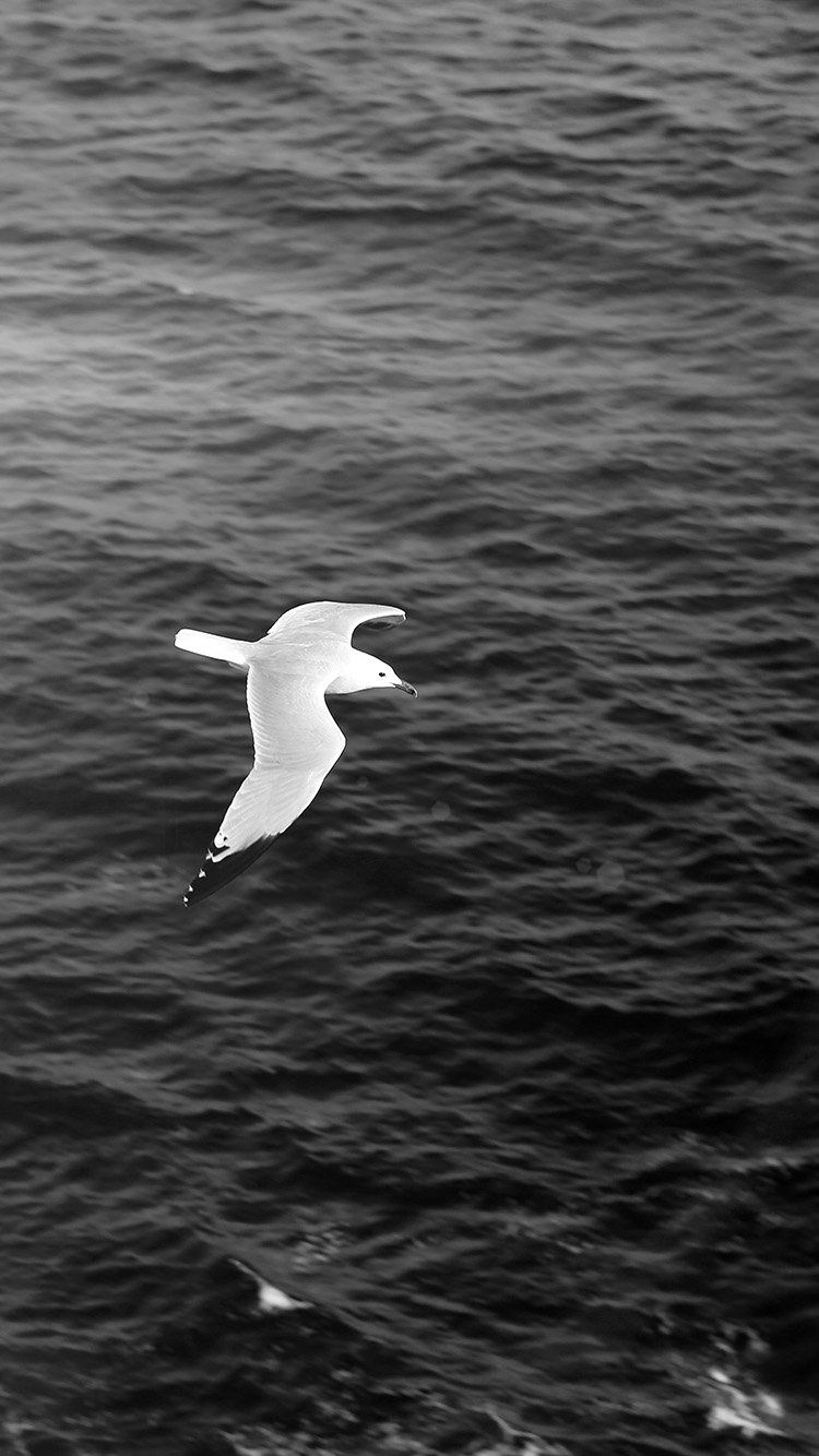 Seagull Bird Sea Ocean Animal Nature Dark Wallpaper Hd Iphone