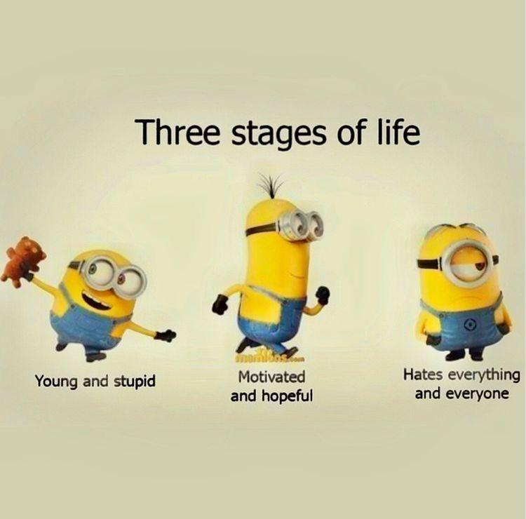 Minions Funny Minion Quotes Funny Minion Memes Minions Funny