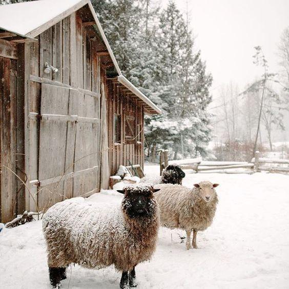 Pin Di Modern . Farmhouse . Life Su Winter . Natural Nel