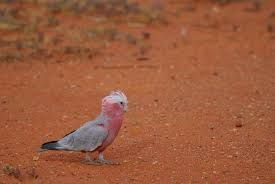 Image result for the outback