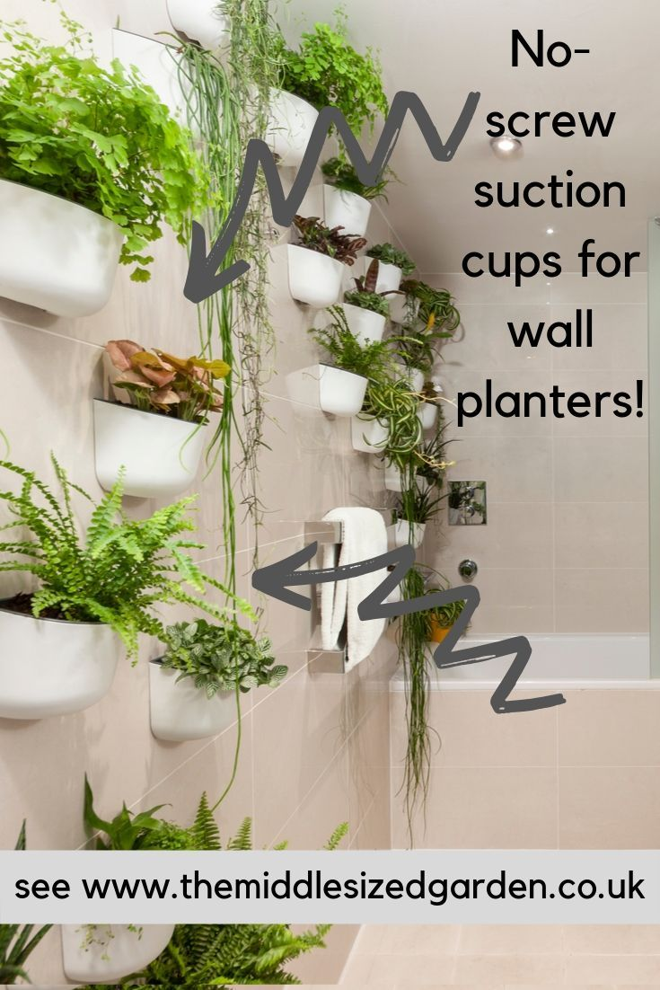 Photo of How to decorate with indoor plants – latest trends – The Middle-Sized Garden