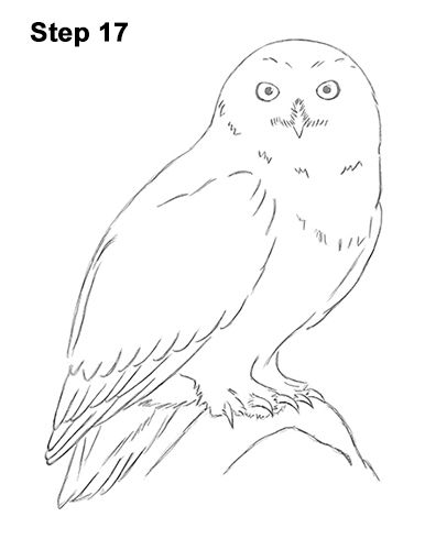 snowy owl drawing 17 owls in 2019. Black Bedroom Furniture Sets. Home Design Ideas
