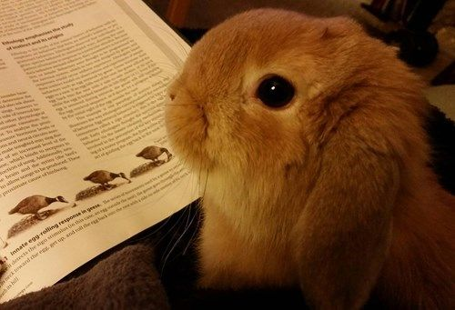 This Bun is Done With Studying For Finals