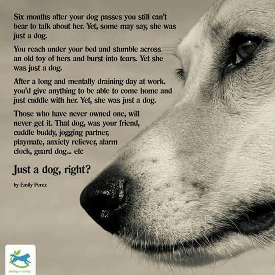 Dog Death Quotes This Really Speaks To My Heart And I'm Sure Othersthose Who Have .
