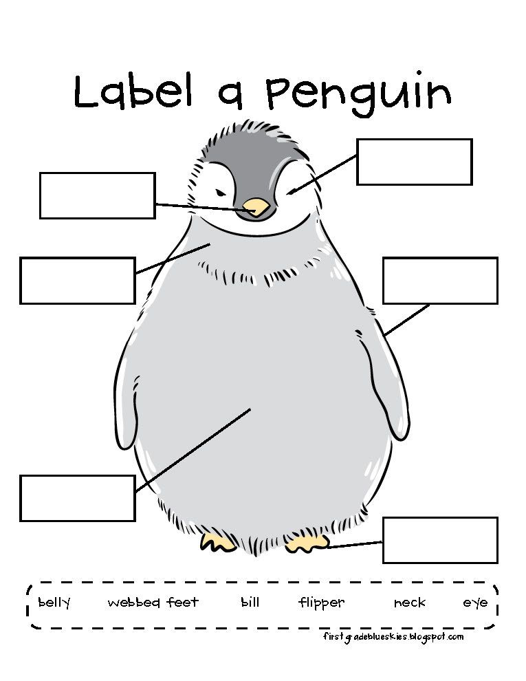 label a penguin worksheet teaching science animals kindergarten kindergarten. Black Bedroom Furniture Sets. Home Design Ideas