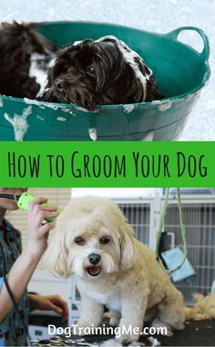 Learn How To Groom Your Dog At Home Take The Pressure Off At Home Dog Grooming With Our Tips On Everything From Brushing B Dog Groomers Cat Grooming Dog Care