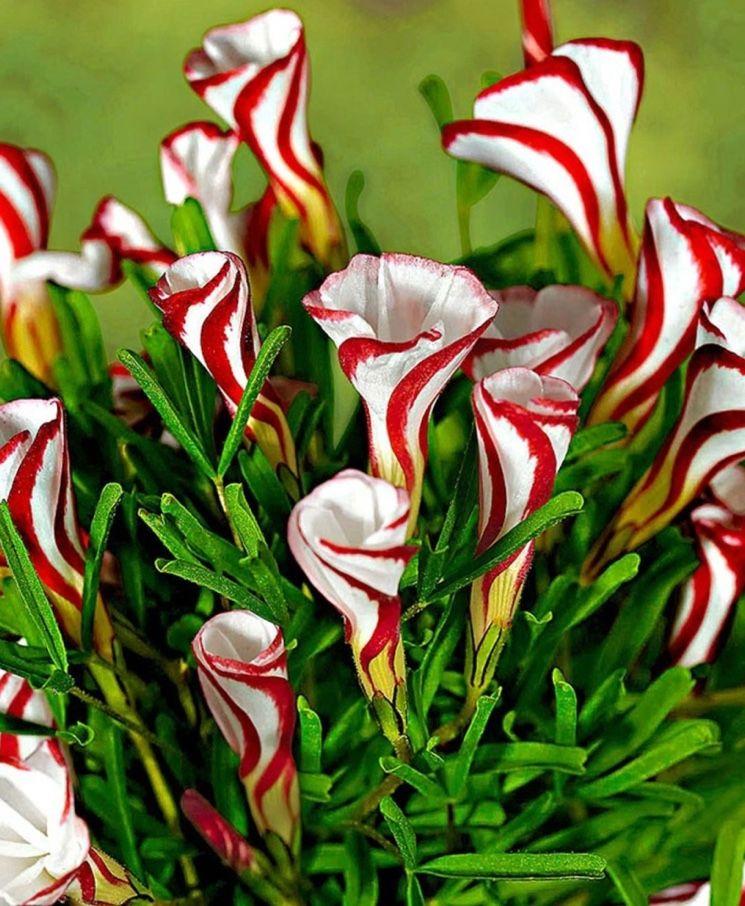 Картинки очень красивые и необычные цветы фото