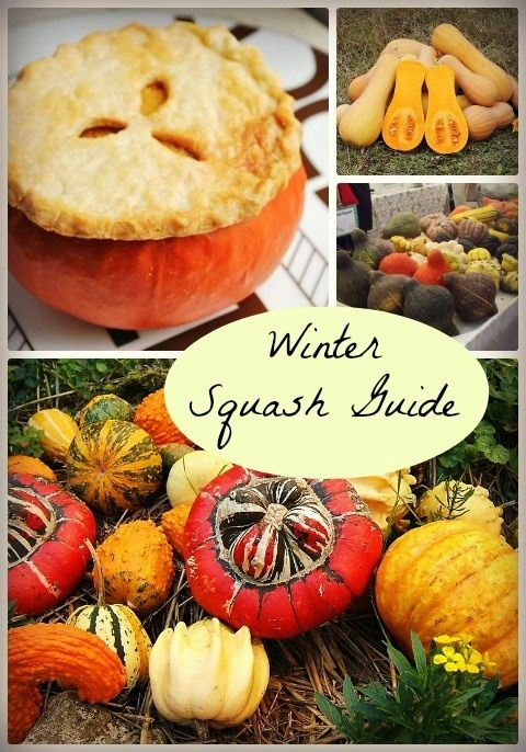 A Guide to Winter Squash Varieties: How to Identify  Cook All Kinds!