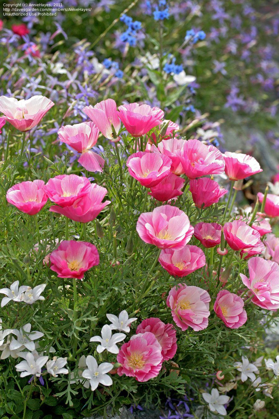 Pin By Tarja Huczkowski On Tarjas Pictures Pinterest Flowers
