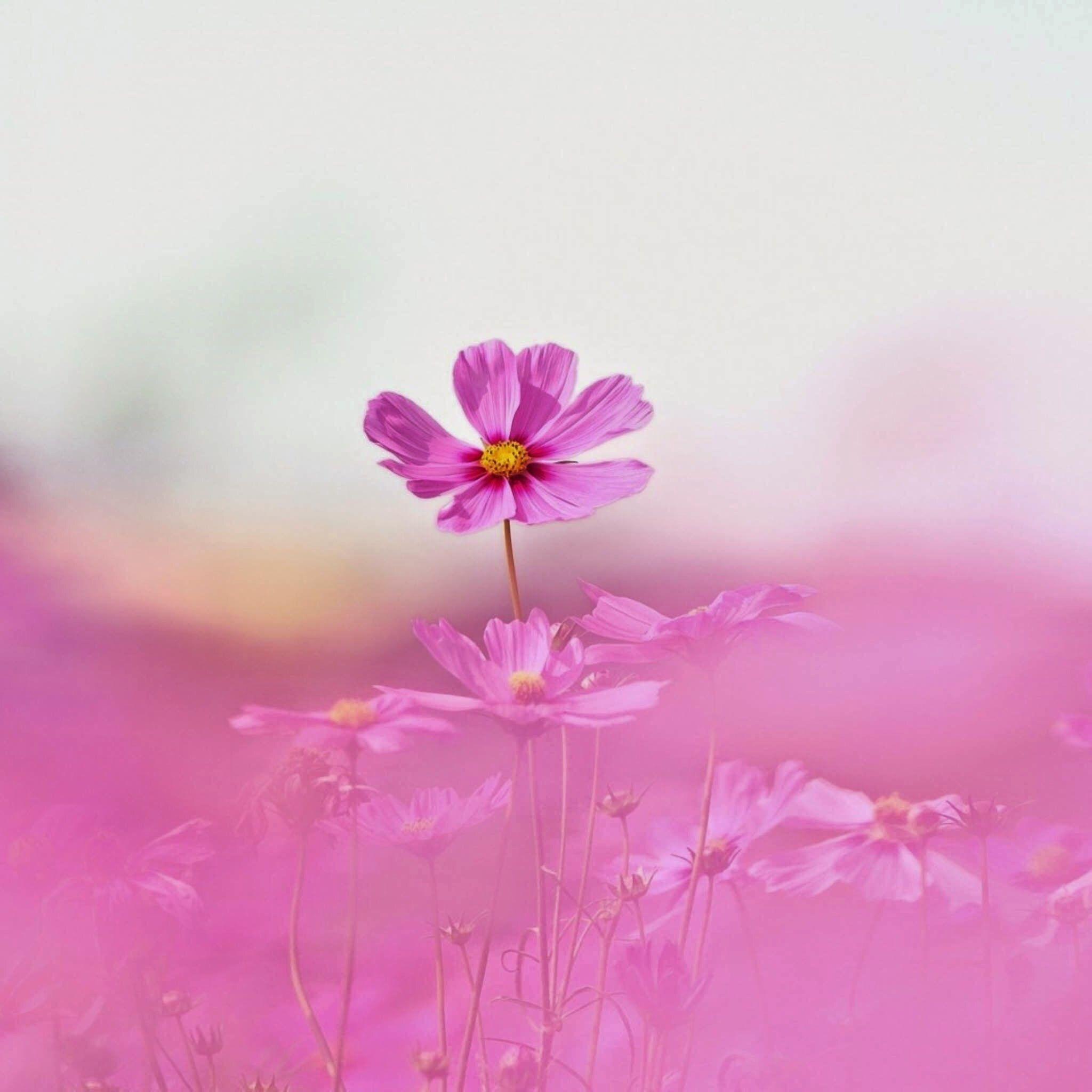 Pin by linda steadman on flowers pinterest flowers