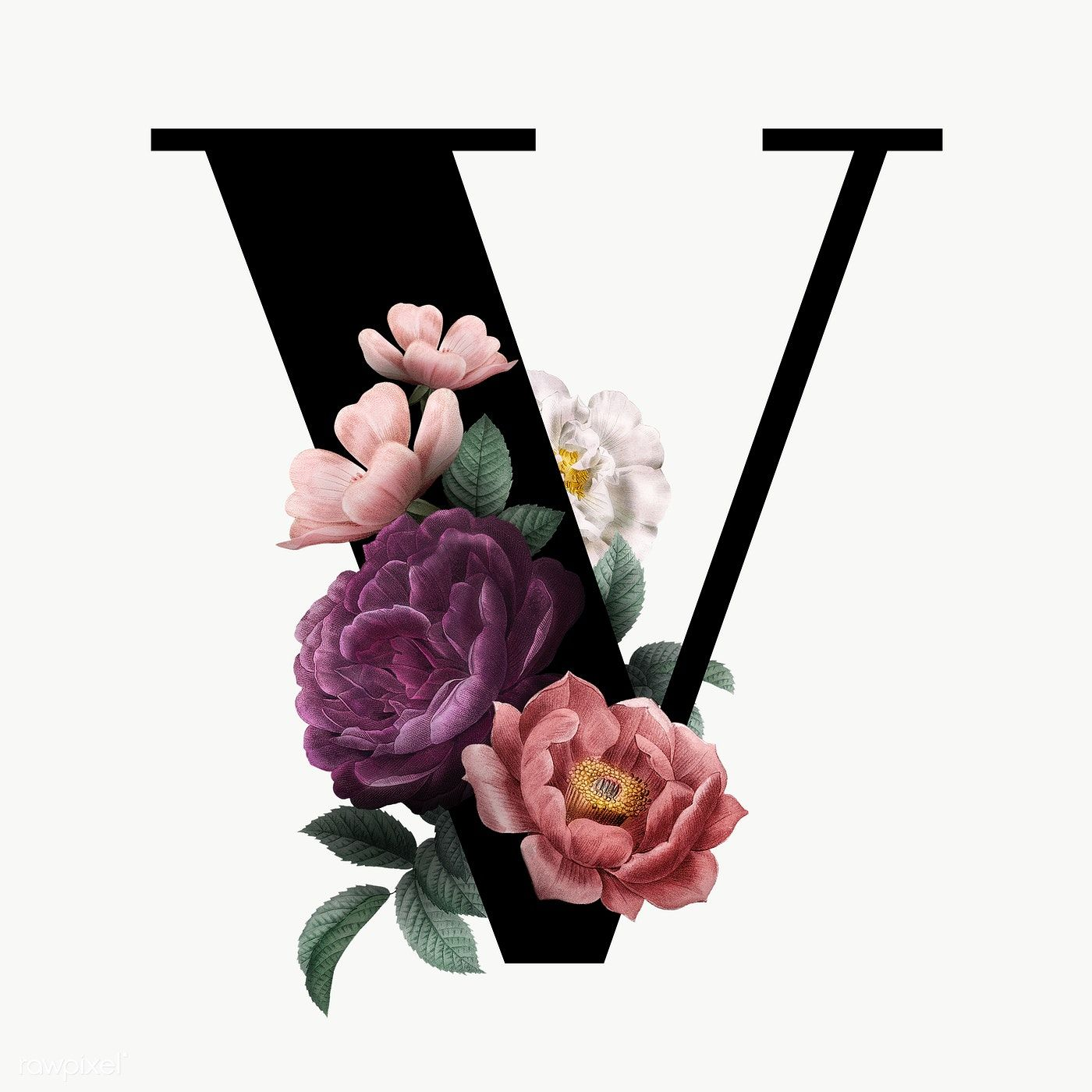 Classic And Elegant Floral Alphabet Font Letter V Transparent Png Free Image By Rawpixel Com Manota Lettering Fonts Fonts Alphabet Lettering Alphabet Fonts