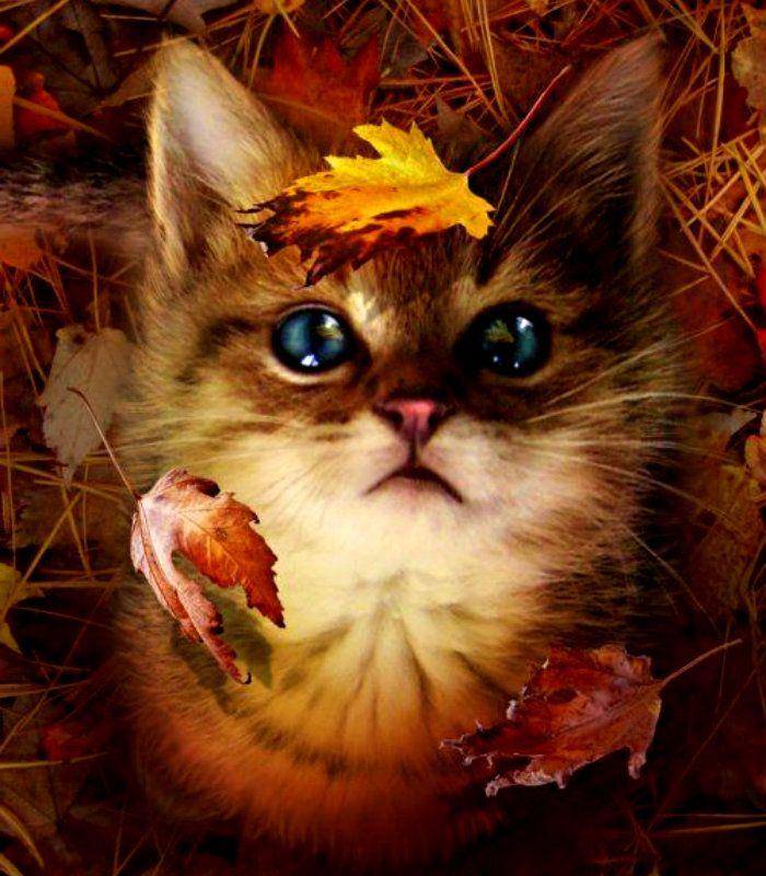 Открытки не грусти осенью, юбилеем ретро