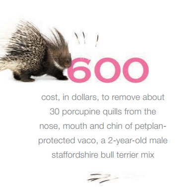 600 Cost To Remove 30 Porcupine Quills From The Face Of Petplan Protected Vaco A 2 Year Old Staffordshire Bu Embrace Pet Insurance Pet Insurance Pet Health