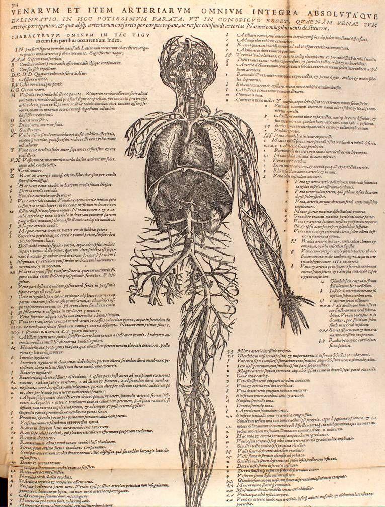 Andreas Vesalius, De Humani Corporis Fabrica,1543 | Historia/Art ...