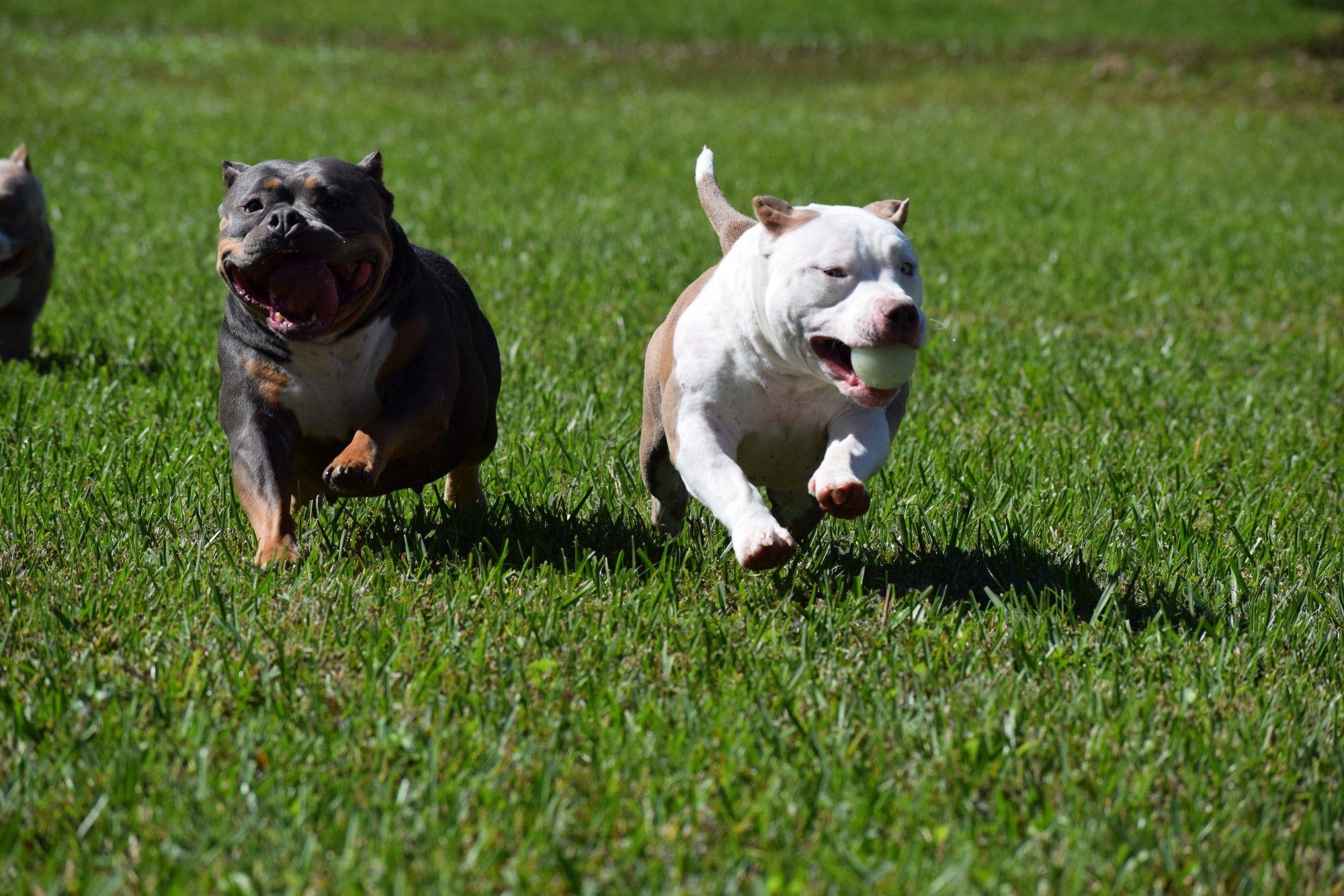 VENOMLINE DISCUSSES THE BEST DOG FOODS, SUPPLEMENTS