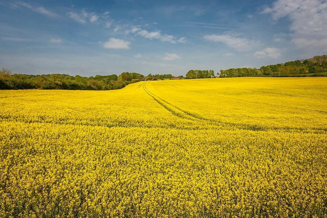 Field. Wiltshire. A bright yellow vibrant field in Wiltshire photographed In all its glory on a bright sunny spring day. This is the high level view looking down from a height of 5m using my specialist high access equipment. Posted on Thursday 10th November 2016 at 6.02am #canon6d #canon #canonphotographer #canonphotography #canonphotos #rickmcevoyphotography #rickmcevoy #architecturalphotography #architecturalphotographer #architecture #architecturephotography #architecturephotographer…