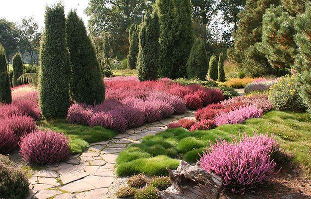 heidekraut garden pool pinterest heidekraut landschaften und g rten. Black Bedroom Furniture Sets. Home Design Ideas
