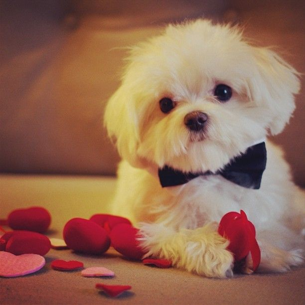 People.com - Your Turn   Show Us Your Furry Valentine!