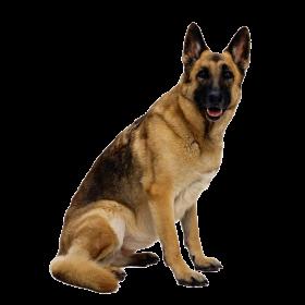 Dog Png German Shepherd Dogs German Shepherd Shepherd Dog