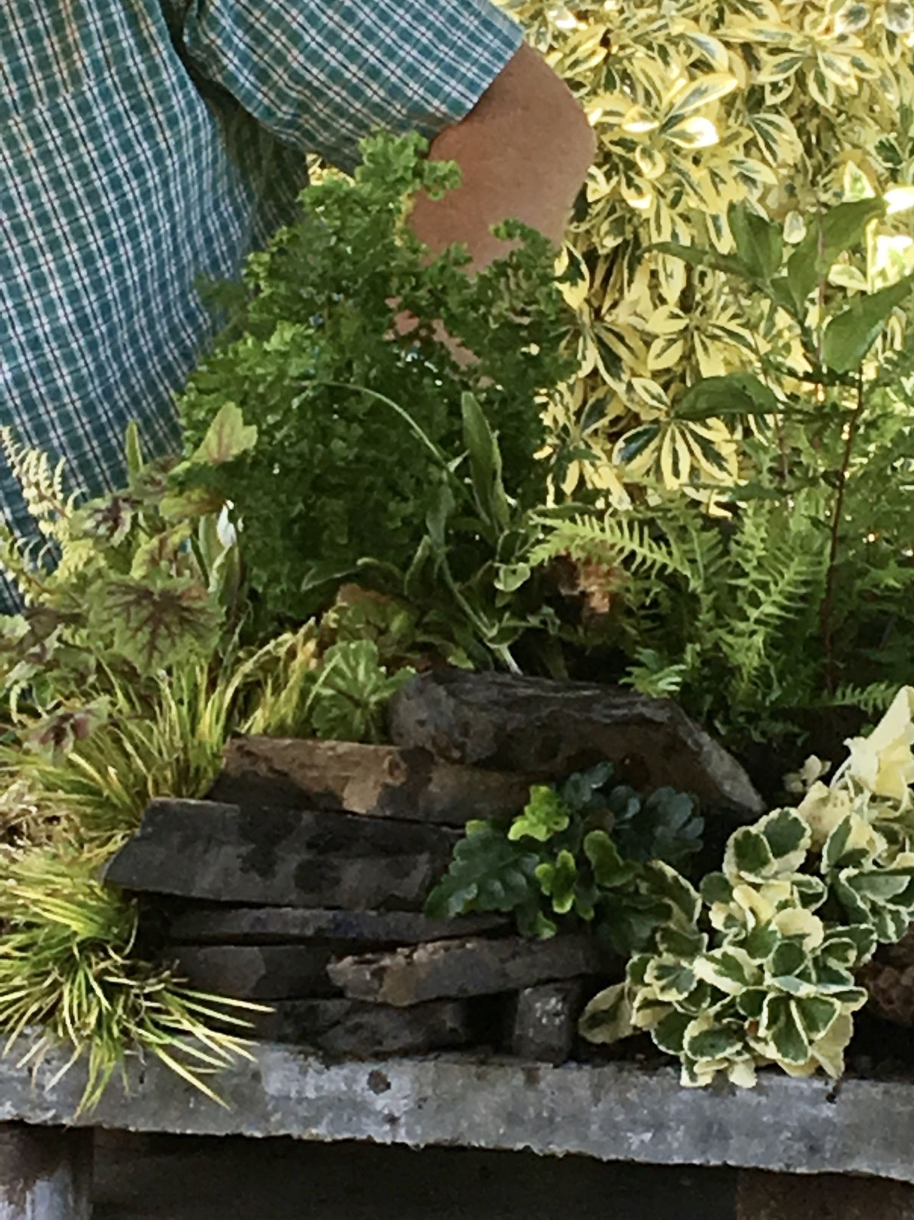 How to build a fern table Ferns, Building, Plants