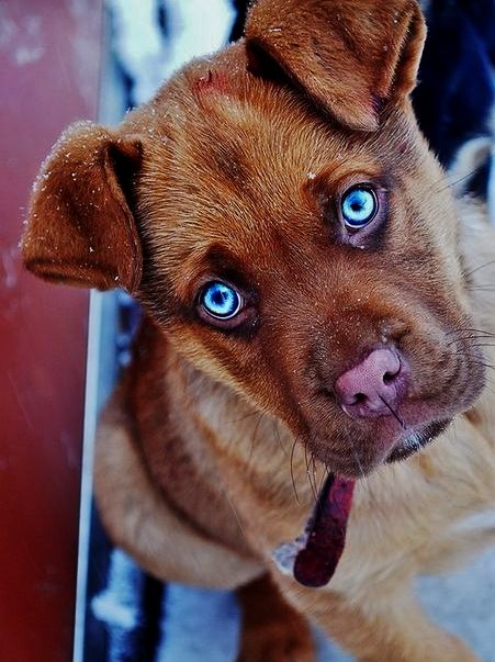 Pin By Ana Rollan Gomez On Blaue Augen Tiere Kittens And Puppies Puppies Dogs