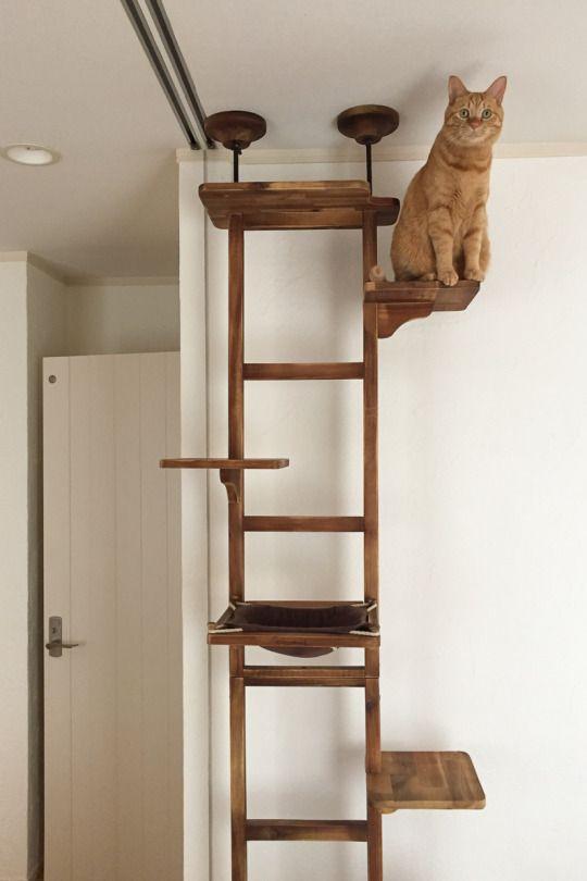 Diy Cat Tree Mobilier De Chat Jeux Pour Chat Et