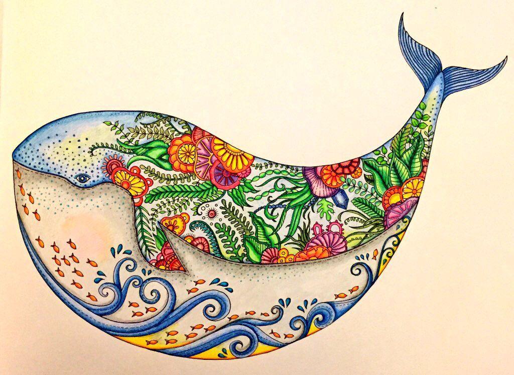 Whale From Lost Ocean Livro De Colorir Colorir Perdida Livro