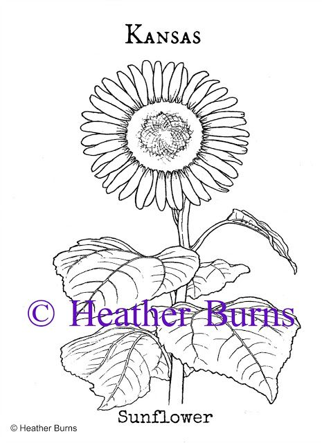 Kansas State Flower Coloring Page