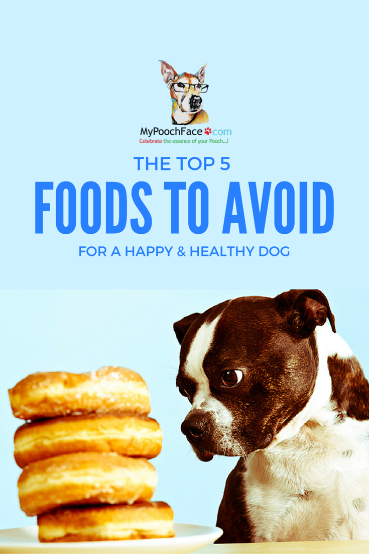 Health Watch Top 5 Foods Your Dog Should Avoid Dogs