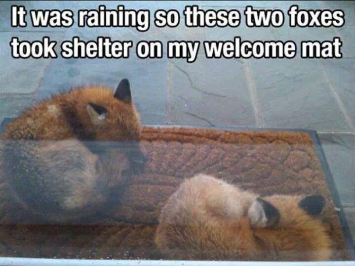 Welcomr foxies