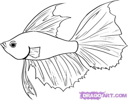 Step 4 How To Draw A Betta Fish Easy Fish Drawing Fish Art Beta Fish Drawing