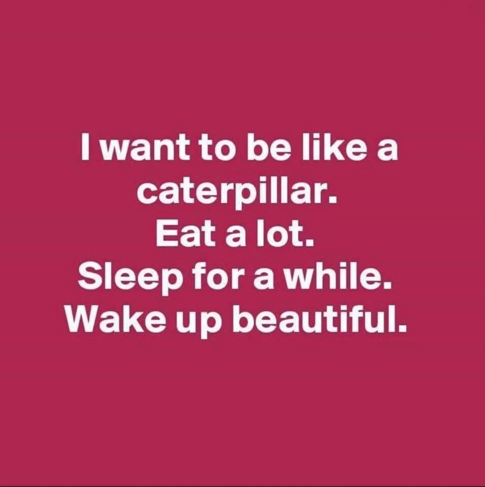 I Want To Be Like A Caterpillar Eat A Lot Sleep For A While Wake Up Beautiful Funny Quotes Quotes Words