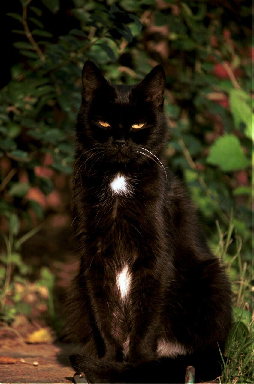 Pin By Emma On Cats Cats Fancy Cats Beautiful Cats