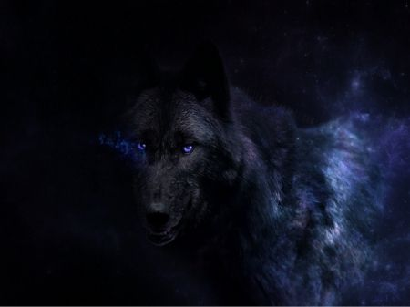 black wolf with blue eyes black beauty with blue eyes wolf