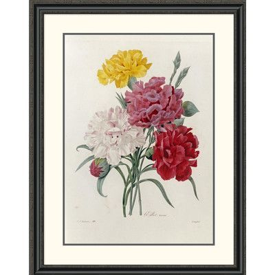"""Global Gallery Carnations by Pierre Joseph Redoute Framed Painting Print Size: 40"""" H x 31.23"""" W x 1.5"""" D"""